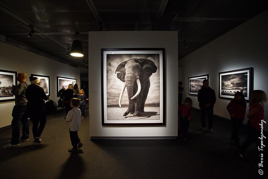 Фотовыставка Ника Брандта в Стокгольме